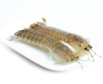 超大新鲜冷冻皮皮虾1KG