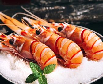 新西兰南极小龙虾
